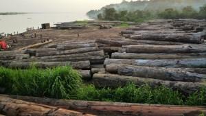 congo logging